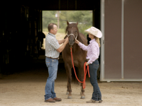 Protect Your Horse From Equine Infectious Disease