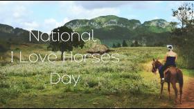Its National I Love Horses Day