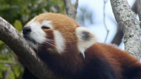 Fascinating Endangered Species